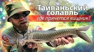 Как поймать ТАЙВАНЬСКОГО ГОЛАВЛЯ? Рыбалка на горных ...