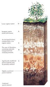 short essay on soil profile words