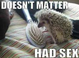wpid-hedgehog-loves-hairbrush.jpg via Relatably.com