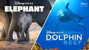 Disneynature's <b>Elephant</b> & Dolphin Reef   Official Trailer   Disney+ ...