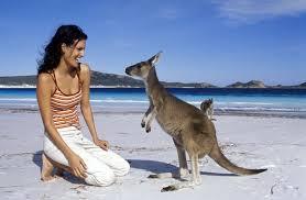 """Résultat de recherche d'images pour """"photo kangourou australie"""""""