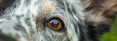 Cleaning Your <b>Dog's</b> Face and Eyes | PEDIGREE®