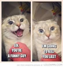 funny fat cat memes - Google Search | Kittehs! | Pinterest | Funny ... via Relatably.com