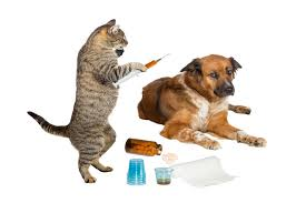 Image result for pet vaccination