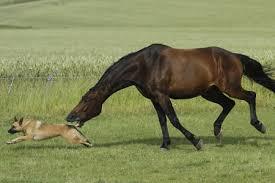 Τι μας παρέχει ένα άλογο;