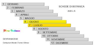 Centaurium littorale [Centauro costiero] - Flora Italiana