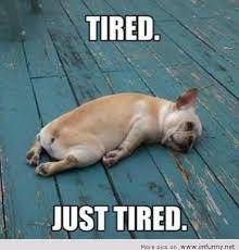 Funny Tired Memes via Relatably.com