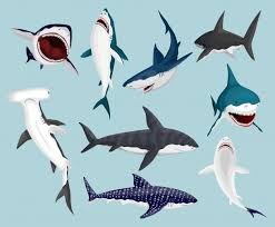 <b>Angry Shark</b> Images | Free Vectors, Stock Photos & PSD