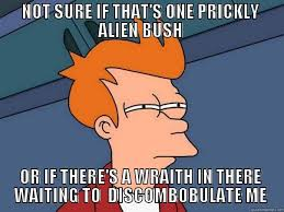 Not sure if one prickly bush or if there's a... - Evolve Memes ... via Relatably.com