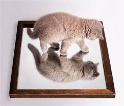 Image result for cat looking in the mirror