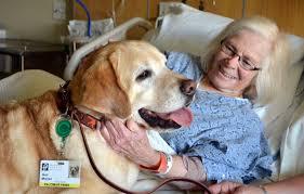 palomar paws palomar health san diego county ca palomar paws pet therapy