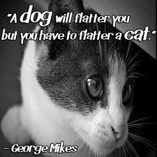"""A dog will flatter you but you have to flatter a cat.""""- George ... via Relatably.com"""