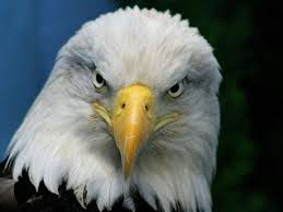 El Cambio del Águila, Un Corto para Cambiar tu Vida