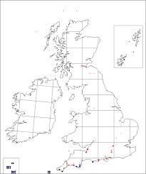 Polycarpon tetraphyllum | Online Atlas of the British and Irish Flora