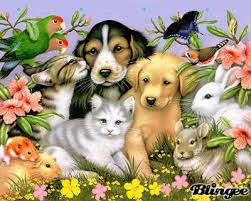 """Résultat de recherche d'images pour """"image d animaux"""""""