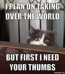 crazy cat memes - Album on Imgur via Relatably.com