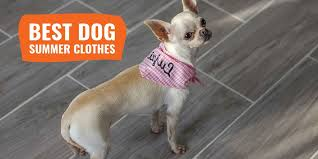 9 Best <b>Dog Summer Clothes</b> – Cooling <b>Outfits</b> for <b>Dogs</b> in the <b>Summer</b>!