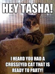 Hey Tasha! I heard you had a crosseyed cat that is ready to party ... via Relatably.com