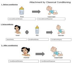 attachment theory   simply psychologyattachment classical conditioning