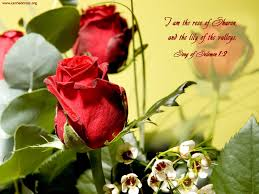 i am the rose of sharon and the lily of the valley song of solomon i am the rose of sharon and the lily of the valley song of solomon 1