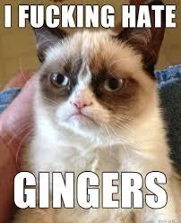 Miffed cat can't catch a break? - Meme Fort via Relatably.com
