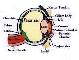 Image result for eye defects