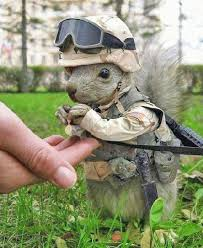 squirrel soldier
