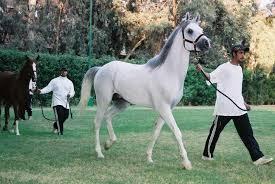 الخيول التركيه من اجمل خيول العالم وولاده حصان سبحان الله Images?q=tbn:ANd9GcSTaNRfAOC2buCc7Spqr6EwgLz59MdRw2xjXSthIFCZoYoYoAdHHQ