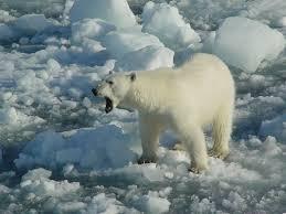 arctique; dans énergies fossiles
