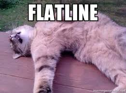 flatline - passed out cat | Meme Generator via Relatably.com