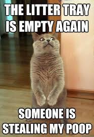 Cat Memes AKA Cute N Cuddly Felines - PinnyPinPin via Relatably.com