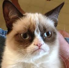 Grumpy Cat Meme Template - grumpy cat meme maker with grumpy cat ... via Relatably.com