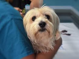 <b>My Kids Have Paws</b> Veterinary Services will be providing a low cost ...