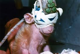 top five reasons to stop animal testing peta 1 it s unethical