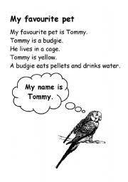 essay on my pet animal  term paper help essay on my pet animal