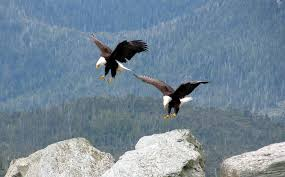 Image result for two birds in flight