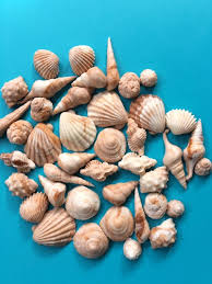 Sea Shell fondant topper <b>50pcs</b> Beach <b>cake</b> topper beach <b>cupcake</b> ...