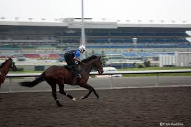 triple dead heat photo essay exhi and grand adventure continue let s start exhi the three year old son of maria s mon is now two for two on the woodbine surface after winning the mile and an eighth victoria park