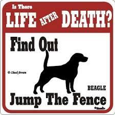 Funny Beagle Quotes. QuotesGram via Relatably.com