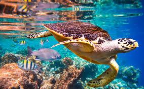 UN Report: <b>Nature's</b> Dangerous Decline 'Unprecedented'; Species ...