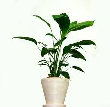 spring houseplant cleaning art of stone gardening home decorators promo code gothic home decor cheap office plants