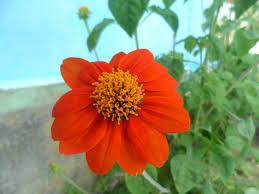 Petite Andaman