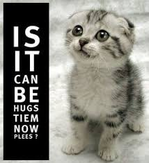 Is it can be hugs tiem now plees? | Know Your Meme via Relatably.com