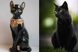 Исчадия дьявола или те, кто <b>приносит</b> удачу: <b>черные</b> кошки в ...
