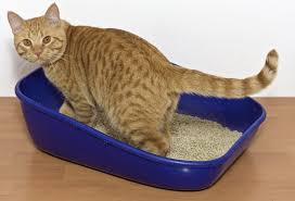 is your cat missing the litter box cat litter box