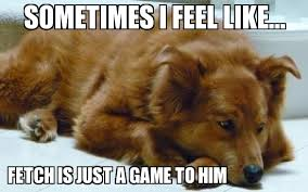 Sad Golden Retriever - WeKnowMemes Generator via Relatably.com