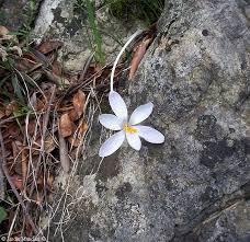 Resultado de imagen para Grieta con hiedra en la roca