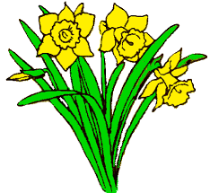 Image result for welsh clipart/daffodil
