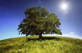Αποτέλεσμα εικόνας για trees