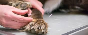 Afbeeldingsresultaat voor acupunctuur bij dieren
